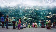 Thomas Struth-aquarium-atlanta-georgia-2013-web.jpg (1920×1097)