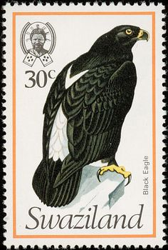Verreaux's Eagle stamps - mainly images - gallery format