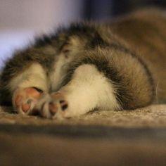 Little Peachie's Tiny-Baby-Corgi-Bottom (say that 5 times!)