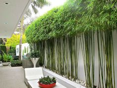 Enjoy your relaxing moment in your backyard, with these remarkable garden screening ideas. Garden screening would make your backyard to be comfortable because you'll get more privacy. Bamboo Landscape, Modern Landscape Design, Modern Landscaping, Front Yard Landscaping, Landscaping Ideas, Landscaping Software, Contemporary Landscape, Modern Garden Design, House Landscape