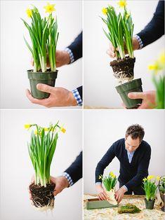 easy spring diy project