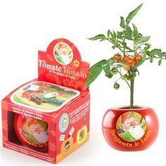 Pot de semis  benjamin le lutin tomate