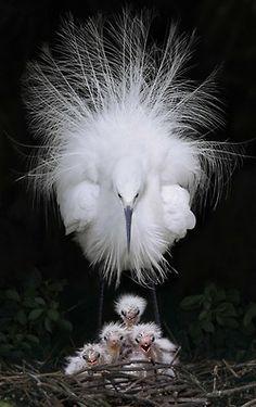 Egretta Garzetta  Sculptural birds