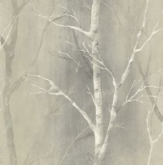 Birch Tree Wallpaper Home Depot | WHITE BIRCH TREES ON GREYISH BEIGE BACKGROUND BY WALLQUEST WALLPAPER