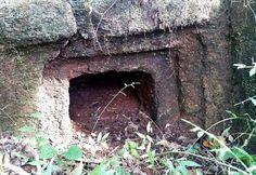 Prehistoric celt discovered