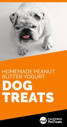 Your dog might be hyperactive, shy or even a bit rebellious. Whatever his personality, your furry friend needs guidance to be the best dog he can be. A training routine will establish your roles… Peanut Butter Dog Treats, Homemade Peanut Butter, Homemade Dog Treats, Healthy Dog Treats, Dog Treat Recipes, Dog Food Recipes, Best Dog Food Brands, Frozen Dog Treats, Dog School