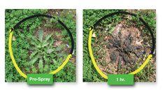 5 Homemade Herbicides That Kill Weeds Permanently Outdoor, Plants, Veg Garden, Herbicides, Green, Garden, Outdoor Structures