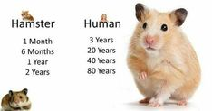 Just Pinned to Hamsters: http://ift.tt/2q1O1DZ #HamsterTips