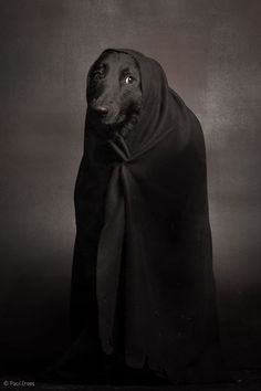 Paul Croes, of course, photographer,a petrified black galgo, Galo, rescue from Spain.
