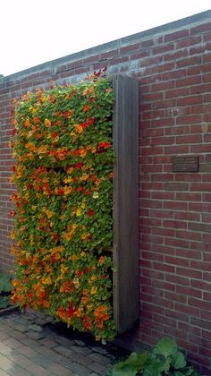 Vertical Flower Garden, nasturtiums See more garden ideas at: http://www.pinterest.com/homedsgnideas/garden-home-design-ideas/