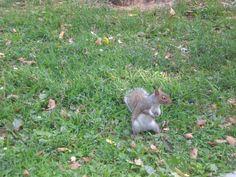 esquilo...