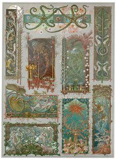 Decorative sea life by Anton Seder