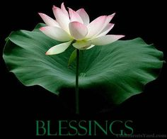 blessed - Google Search