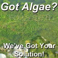 Clean Your Pond And Waterfall Rocks Kill Green Water Algae String