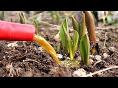 The Creator, Vegetables, Gardening, Diet, Youtube, Lawn And Garden, Vegetable Recipes, Banting, Youtubers