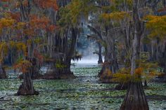 homes on caddo lake | bensozia: Today's Place to Daydream About: Caddo Lake