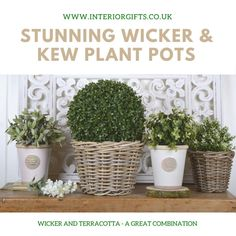 Medium Wicker /Rattan Basket Planter or Plant Pot or Flower Pot with waterproof liner for porch, patio or terrace, rattan wicker product Basket Planters, Rattan Basket, Plant Pots, Potted Plants, Kew Gardens, Botanical Gardens, Ceramic Pots, Garden Pots