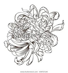 Find Japanese Flower Tattoo Chrysanthemum Flower Blossoms stock images in HD and millions of other royalty-free stock photos, illustrations and vectors in the Shutterstock collection. Thousands of new, high-quality pictures added every day. Chrysanthemum Drawing, Japanese Chrysanthemum, Chrysanthemum Flower, Japanese Flowers, Japanese Flower Tattoos, Tattoo Japanese, Bild Tattoos, Body Art Tattoos, Small Tattoos