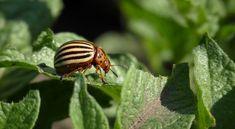 Ültesd te is ezeket a kártevőriasztó növényeket Snail, Garden, Garten, Lawn And Garden, Gardens, Gardening, Outdoor, Slug, Yard