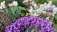 jaro v zahrádce