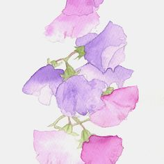 Cascade - sweet pea watercolour