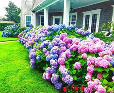 The spring growth on the Vineyard Hydrangeas look promising! Provided we don't get a hard frost looks like these babies will be stellar… Rendered Plans, Landscape Design Plans, Hydrangeas, Garden Design, Vineyard, Frost, Spring, Flowers, Plants