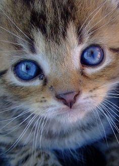 Pretty blue eyes