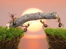 Personas de las hormigas que construyen el puente, trabajo en equipo Fotos de…