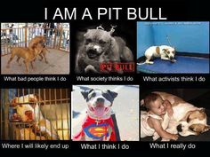 I am a Pit Bull...this so true! Can people think back....Little Rascals!