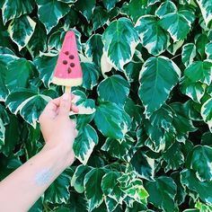 Happy #Sunday Glazers!! Hope you're all having a watermelon afternoon!  Share your Glaze moment with us tagging your picture with #GlazeMe