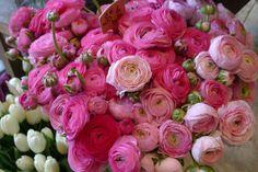 Lovely Ranunculus