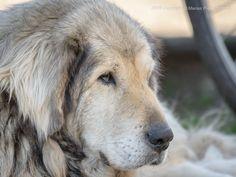 the Dog by Marius Papadopol on 500px