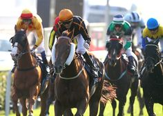 Able Friend makes top three as Hong Kong reaches new high in World's Best Racehorse Rankings - News - The Hong Kong Jockey Club 130th Anniversary