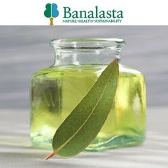 Shop NOW - #Eucalyptus Radiata Oil - Get product info, Read reviews & Add to shopping list. Many products available to Buy Online at #Banalasta with hassle-free returns!  #RadiataOil