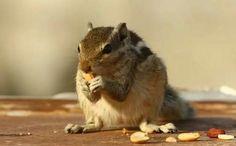http://birdandwildlifephotography.com/palm-squirrel-story-three-strips/