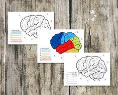 Prozkoumáváme lidské tělo do hloubky a tentokrát se ponoříme do tajů našeho mozku. Pojď se s námi podívat jaké má mozek části a co všechno řídí. #lidsketelo #mozek #organy #aktivityprodeti #sdetmidoma #ucimesedoma #domskola #domskolaci #domaciskola #distancnivyuka #pracovnilisty #pracovnilistyprodeti #ucimesesdetmi #worksheets #humanbody Books, Libros, Book, Book Illustrations, Libri
