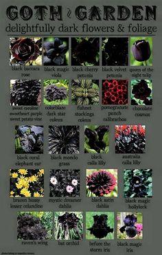 Super Ideas For Flowers Garden Drawing Beautiful Dark Flowers, Beautiful Flowers, Exotic Flowers, Tropical Flowers, Fresh Flowers, Spring Flowers, Garden Plants, House Plants, Potato Vines