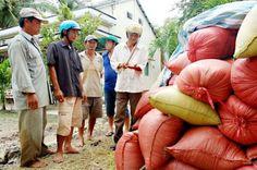 Giá lúa thấp, nông dân gặp khó | TIN TỨC NÔNG NGHIỆP