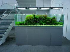ADA Nature Aquarium | +yooko+ | Flickr