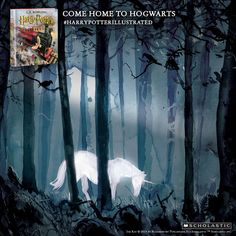 The majestic white unicorn in a haunting scene from the new illustrated edition of Harry Potter and thre Sorcerer's Stone. #harrypotterillustrated