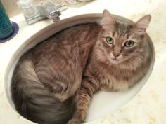 Love cats in sinks! My cat does the same thing!