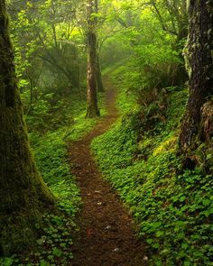 Hobbit Trail..by Jeff Hobson