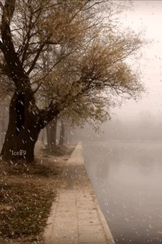 Rainy days are beautiful Sound Of Rain, Singing In The Rain, Winter Love, Winter Wonder, Rainy Day Pictures, Rain Gif, Rain And Thunderstorms, Marguerite Duras, Smell Of Rain