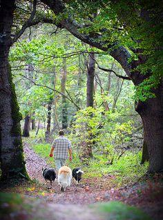Abbots Wood, East Sussex   von Alan MacKenzie