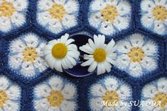 "https://flic.kr/p/9WbA1e | ""Dasies on blue sky"" 