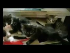 Funny animal Videos Of Funny Cats & pet Compilation best - Trying not to laugh # 6 -  #animals #animal #pet #cat #cats #cute #pets #animales #tagsforlikes #catlover #funnycats  Learn how to speak cat! Click HERE for the cat bible! Funny animal Videos Of Funny Cats & pet Compilation best – Trying not to laugh # 6  - #Cats