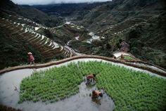 Terrazas de arroz de