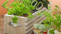 Spice up your decor with a wooden tabletop crate that holds three pots of your favorite herbs.