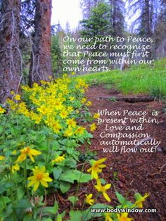 The forest path to Peace...
