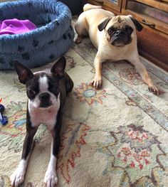 Welcome to the menagerie: Crawfish and alligator dog treats: Liam and Sinead review